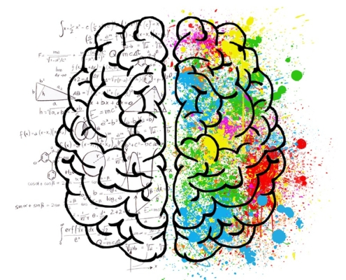 cervello impara